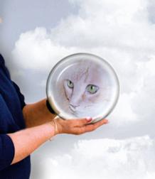 Animal Psychic Online Now